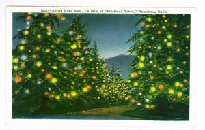 Santa Rosa Ave A Mile of Christmas Trees, Pasadena California PPC