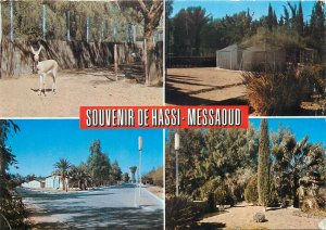 Algeria Hassi-Messaoud pictures collection Postcard