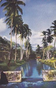 Canal Scene Rio Cobre Jamaica