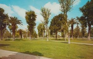 Court House Park Gardens Merced Calafornia Postcard