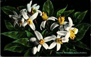 Vtg Cartolina Arancione Fiori IN California - Theo Sohmer Pub Cromata Unp