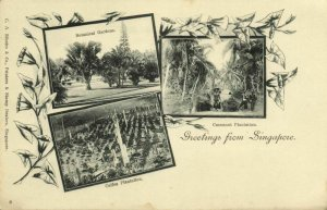 straits settlements, SINGAPORE, Coffee & Cocoanut Plantation (1899) Postcard