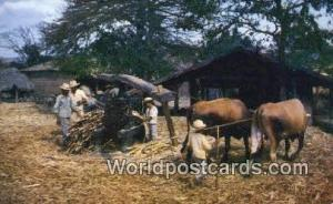 El Salvador El Salvador, Central America Primitive sugar can grinding El Salv...