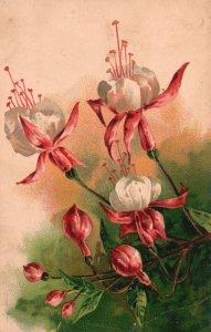 ?Vintage Postcard 1910's Beautiful Pink White Flowers Bloom Painting Artwork