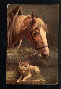 047326 Head of HORSE & Dog TERRIER by MULLER vintage PC