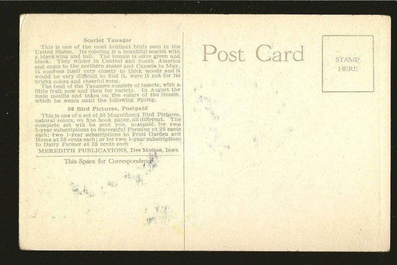 Vintage Scarlet Tanager Art Meredith Publications Des Moines Color Postcard