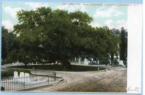 SC - Charleston, Magnolia Cemetery, The Old Oak-- over 700 years old in 1909