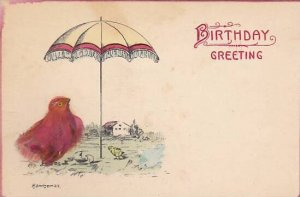 Beautiful Bird With Real Feathers Birthday Greeting