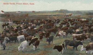 PRINCE ALBERT , Sask. , 00-10s ; Stock Yards