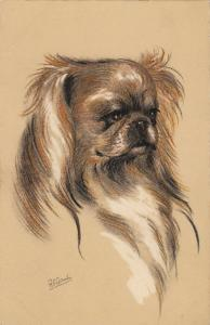 AS: R.F.G., 1900-10s; Profile of Pekingese