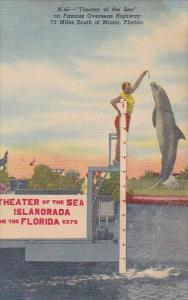 Florida Islamorada Jumping Porpoise At Theatre Of The Seas In The Florida Key...