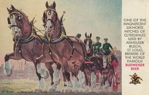 BUDWEISER BEER , Clydesdale Horse Team , 50-60s