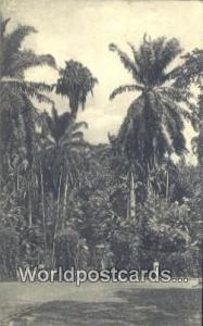 Ceylon, Ceylan, Sri Lanka Kandy Peradeniya Gardens