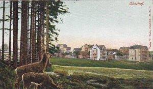 Deer, Panorama, Oberhof (Thuringia), Germany, 1900-1910s