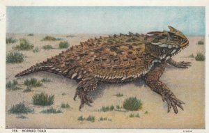 Horned Toad, PU-1938; A curious little animal found in the sandy desert wates...