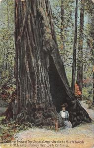 Muir Redwoods California~Victorian Lady & Gent Hide in Giant Tree~1910 PC