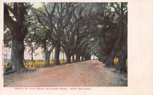 Grove of Live Oaks, Audubon Park, New Orleans, Louisiana, Early Postcard, Unused