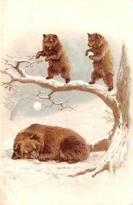 Bear Post Card Old Vintage Antique 1904