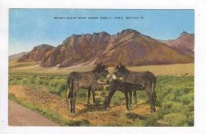 Desert Scene With Burro Family, Reno, Nevada, 1930-40s
