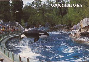 Canada Killer Whale Vancouver Aquarium British Columbia