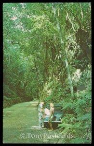 Fern Gully - Ocho Rios, Jamaica