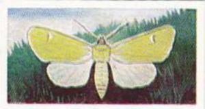 Swettenhams Tea Vintage Trade Card Butterflies & Moths 1958 No 12 Owl Moth