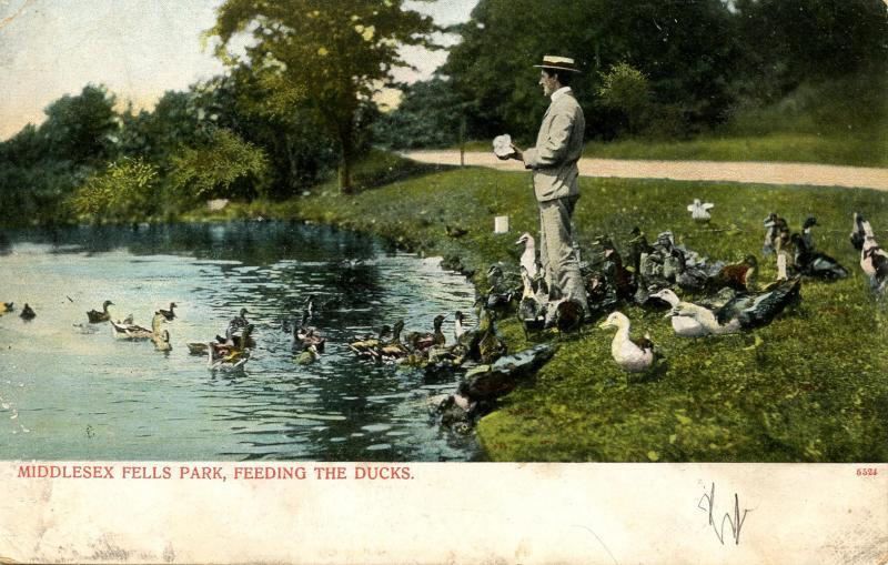 MA - Middlesex Fells. Feeding the Ducks in the Park