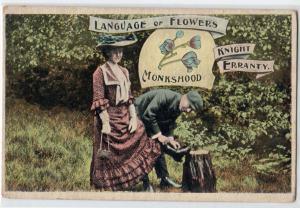 Language of Flowers - Monkshood