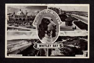 UK Thinking of You Dog Postcard England Carte Postale Postkarte United Kingdom