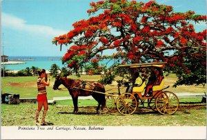 Nassau Bahamas Poinciana Tree & Carriage Horse Woman Vintage Shoes Postcard C4