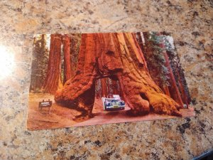 Vintage 1949 Yosemite National Park, California Tunnel Tree Postcard