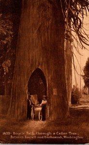 Washington Bicycle Path Through A Cedar Tree Between Everett and Snohomish 1918