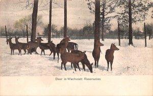 Deer in Wachusett Reservation in Wachusetts, Massachusetts