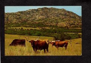 OK Longhorn Cattle Wichita Wildlife Refuge Lawton Oklahoma Postcard