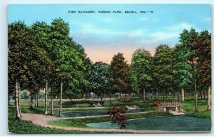 Fish Hatchery Forest Park Brazil Indiana 1950s Vintage Postcard D93