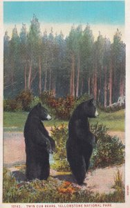 YELLOWSTONE PARK, Wyoming, 1900-1910s; Twin Cub Bears