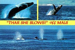 Hawaii Maui Humpback Whales