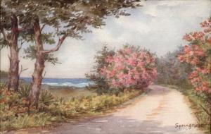 Ethel Tucker #57 Hamilton Bermuda Springtime c1950s Postcard - Used