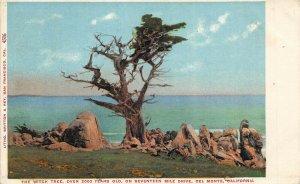 Del Monte California 1908 Postcard The Witch Tree Brooks California Cancel