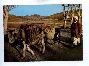 196049 AFGANISTAN Village transportation Old photo postcard