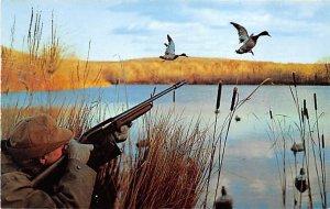 Mallard in the Sight Ducks / Geese Unused