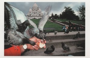 Feeding French Birds at Sacre Coeur Square Willette Paris Postcard