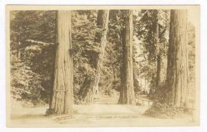 RP A driveway in Stanley Park, B.C., Canada, 1910s