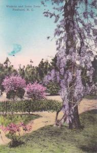 North Carolina Pinehurst Wisteria And Judas Trees Albertype