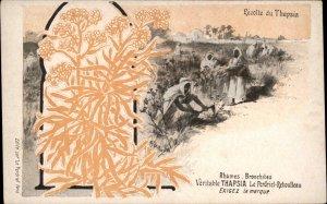 Veritable Thapsia Le Perdiel-Reboulleau Arab Farmers Harvest c1900 Postcard