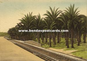 israel palestine, SUR, Oasis in Wilderness, Railway, Palm Trees (1930s)