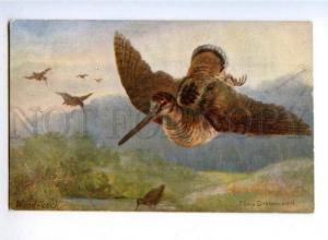 178132 Bird hunting woodcock TUCK Drummond #9524 vintage