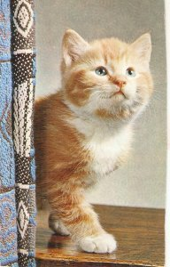 Ginger. Cute picture of sitting kitten Nice vintage english postcard