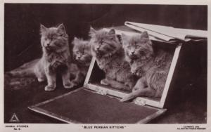 Blue Persian Kittens Cat 2x Old Cats Postcard s