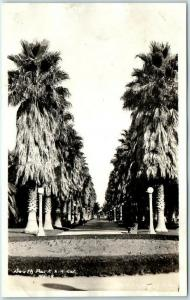 Los Angeles California RPPC Real Photo Postcard South Park Palm Trees c1920s